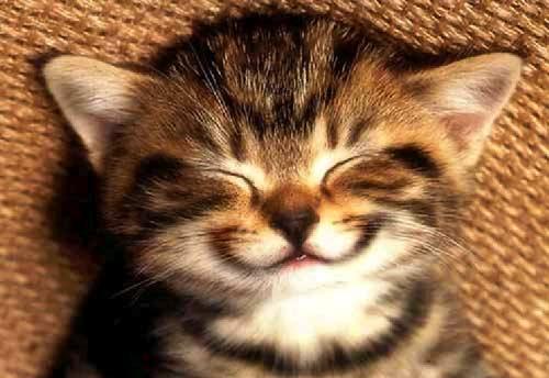 smile-kitten-large.jpg