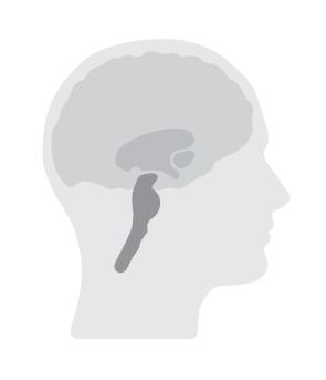 3_system_brain