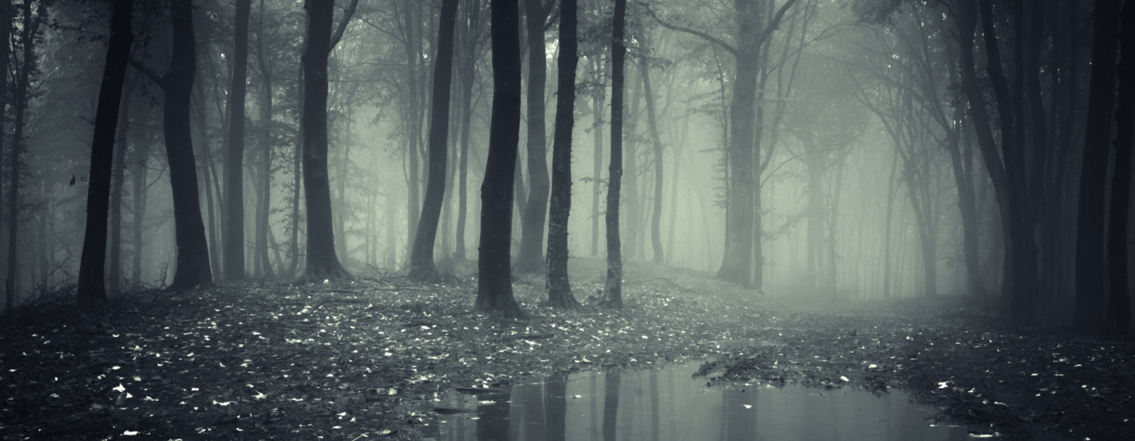 murky-forest.png