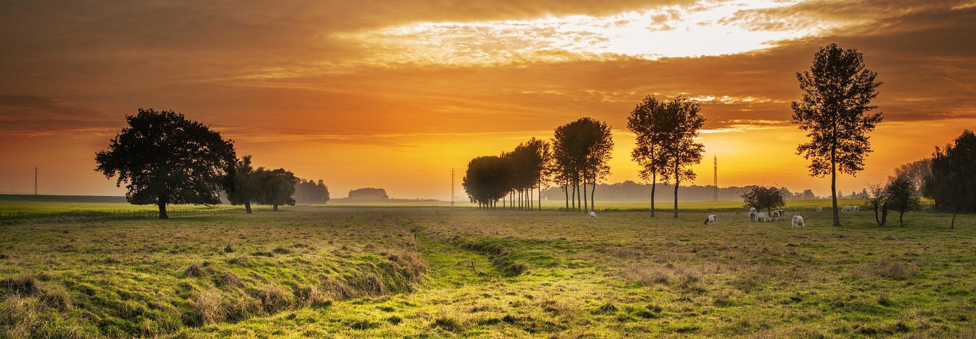 perfect-meadow.jpg